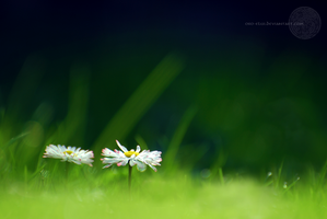 Backyard Mysteries. by oro-elui