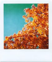 Polaroid - Urban Autumn 3 by LightOfThe80ies