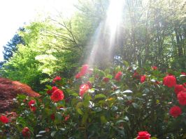 God Rays and Flowers by Foxiwan