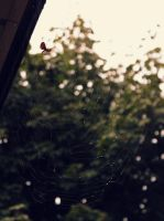 Miss Spider and her Web by JohnnyNiffer