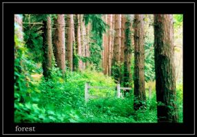 forest corridor with fence by envyouraudience
