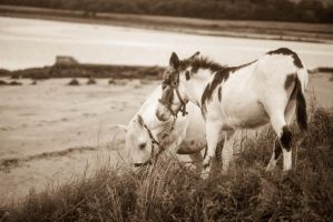 Horses by Draiocht-651