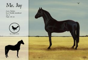 Mr. Jay sheet by blackseagull