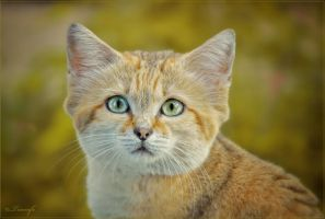Sand cat portrait by Triumfa