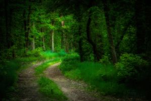 Mystic Forest #4 by reznor666