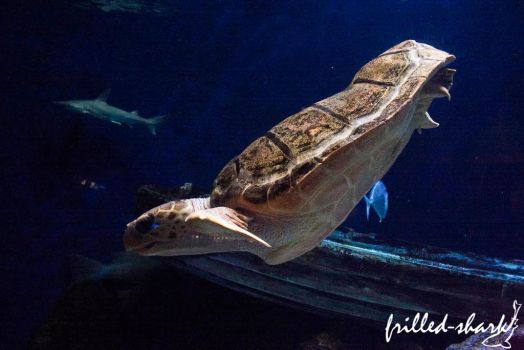 Bobbing My Way Downtown by frilled-shark