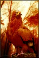 Majestic by KYghost