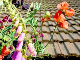 Photoshopped Sweet Pea And Foxglove Watercolour by aegiandyad