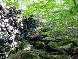 A Wall in the Woods 5 by MorganCG