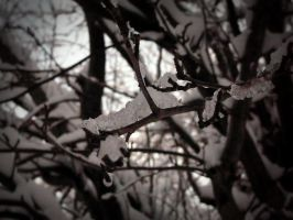 Snow Covered Branches by Satanizmihomedog