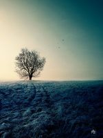 The Nowhere Tree - Without Stars by MBHenriksen
