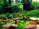 forest full of mushrooms by ANONYMOUSlovesMARVEL