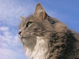The Scent Of Spring by RocksRose