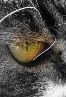Cats eye Macro by printsILike