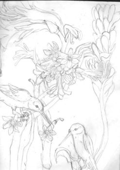 humming birds and flowers by i-love-toboe