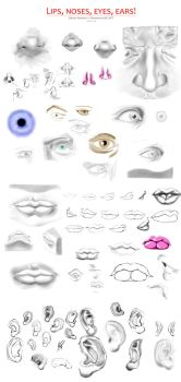 Lips, Noses, Eyes, Ears (August 2015) by MammuthusBC