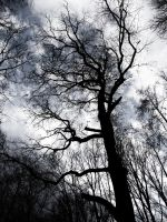Tree Without Leaves by Caillean-Photography