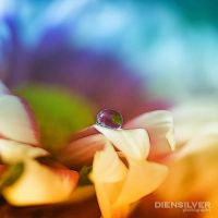 Beauty colors effect by diensilver