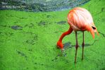 The Flamingo by H-J-R