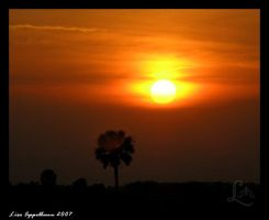 Florida Sunset by Cillana