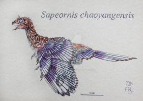 Sapeornis chaoyangensis by PedroSalas