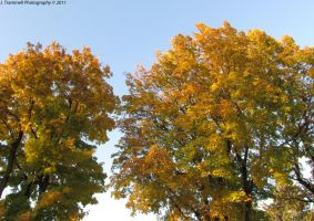Fall Colors 3 by JLAT1990