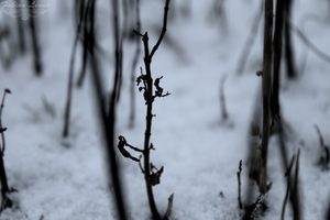 The Lonely Twig by TcnBiob