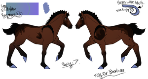 Eb Foal Design For Blackbiene by ChiibiNess