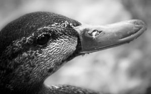 Duck in Time by Mckronic