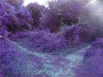 Purple Path. by AngelicDevil97