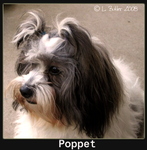 Puppy Poppet by Granny-Chobit