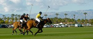 Polo Chase Stock by ThePerfectEquestrian