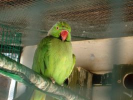 Green Parrot by Alcyone07