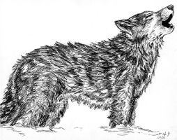 Wolf Pen Drawing by Frabulator