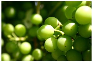 Grapes by Terza
