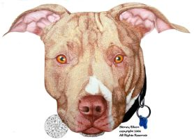 Portrait of Nugget - pit bull by sidneyeileen