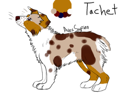 Tachet new Aussie OC lineart by caiquedesigns by AusieOtterPie