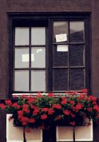 window by cloe-patra