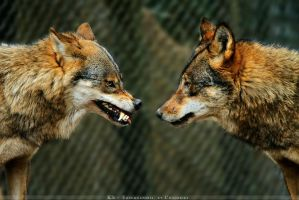 Face to Face by Khalliysgraphy