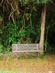 bench by chadlystock