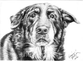 Dog Commission 5 by jucyjesy82