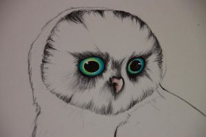Owl in Progress by Elisijane