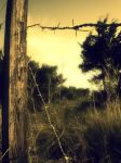 Barbed wire by MalNicGo