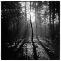 Horsell Common with Holga by Mohain