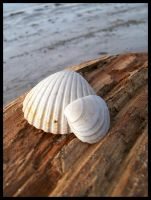 Seashells on the Seashore by death-ek