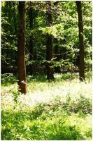 forest life 9 by wildtea
