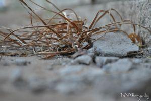 Dead Weeds by AllAboutDianne