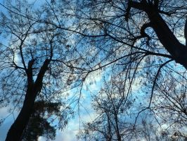 Blue sky by RODOTHEA