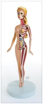 Barbie Anatomical Model by freeny