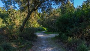 Nature Path by biffexploder